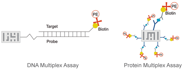 DNA & Protein Multiplex Assays